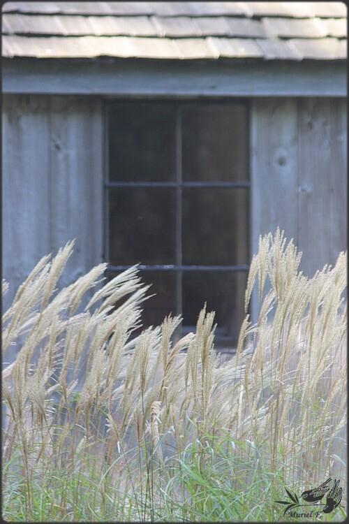 Flânerie à la foire aux plantes de Lasnes