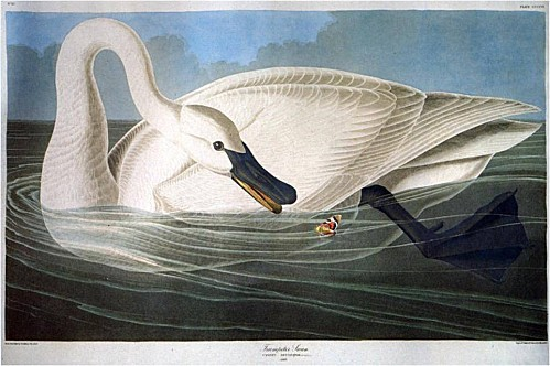 john-james-audubon-001.jpg