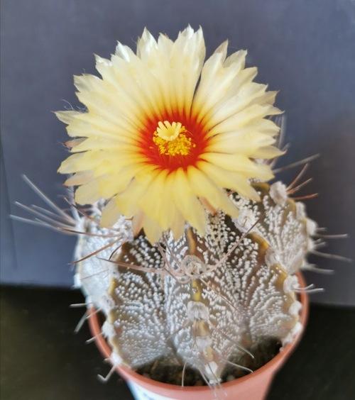 dernières floraisons d'août