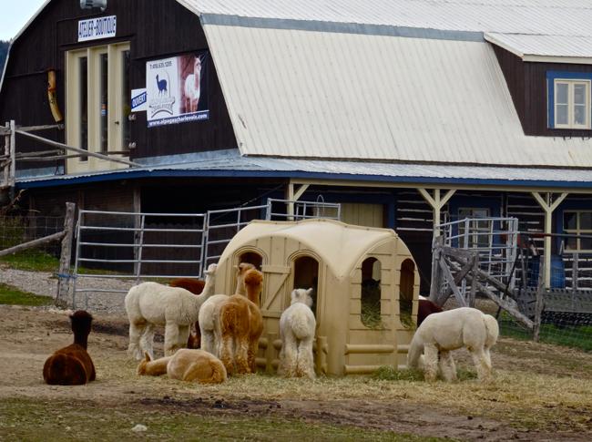 partage photos de décembre : nos amis les animaux