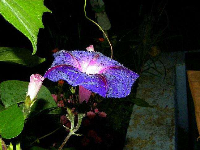 Chagrin de fleur