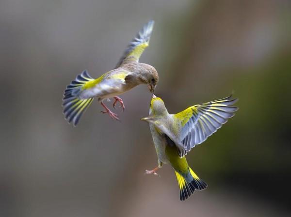 La tendresse des oiseaux