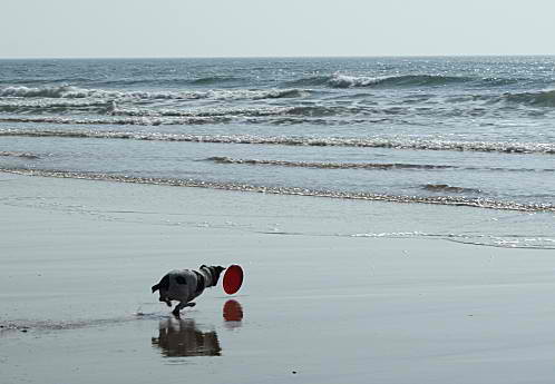 domino-a-la-plage--3--2-.jpg