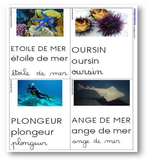 Cartes de vocabulaire sur le thème de la mer