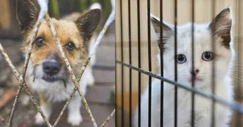 Pourquoi les gens abandonnent-ils leurs animaux ?