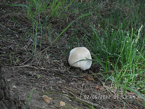 fleurs-et-champignon-008.JPG