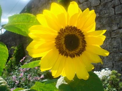 Blog de lisezmoi :Hello! Bienvenue sur mon blog!, Merci a Floriencia pour son joli cadeau