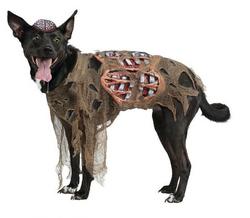 DIY : Faire un costume / déguisement de zombie / La Folie des Fêtes
