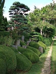 jardin zen 3