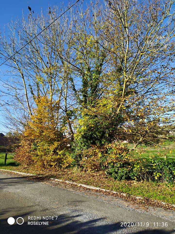 L'image contient peut-être: arbre, ciel, plante, plein air et nature, texte qui dit 'REDMI EDMTE7 NOTE ROSELYNE 2020 2020/11/9 11:36'
