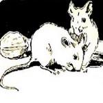 Bonne petite souris