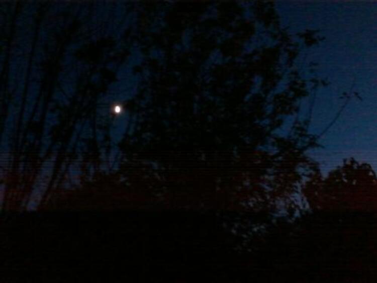 la forêt dans la nuit