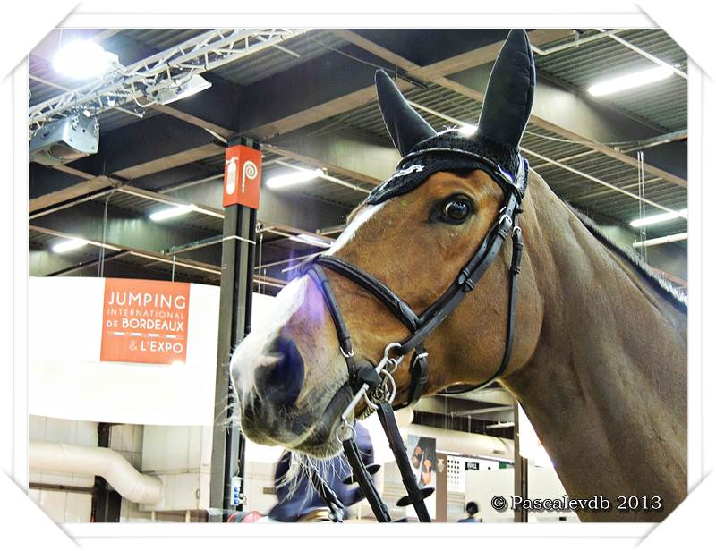 Jumping international de bordeaux - 5/5