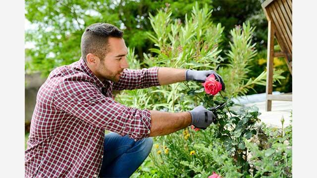 7 Manfaat Berkebun Di Rumah Untuk Kesehatan Tubuh