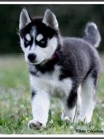 Layka (2 mois)