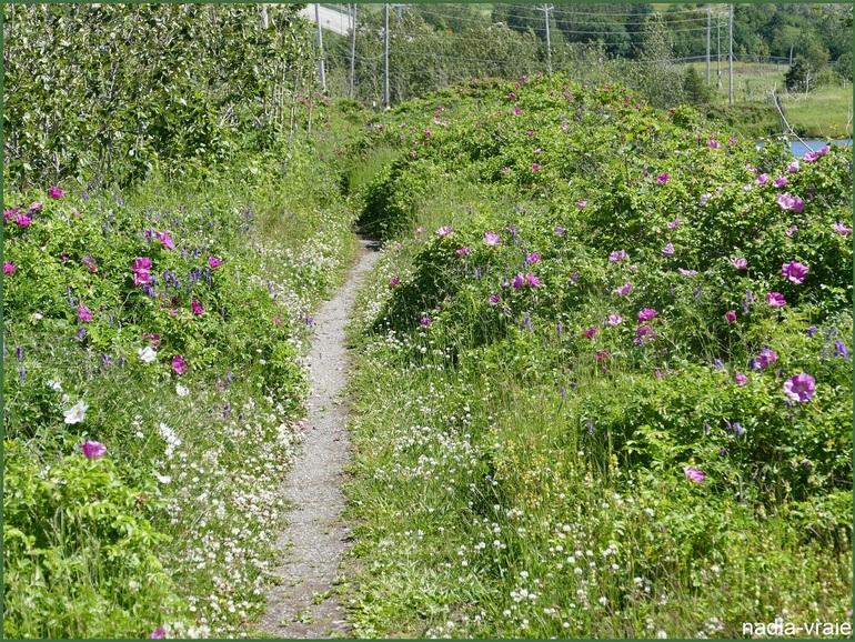 Un sentier, un chemin, (Mille défis  géré par Lydie)