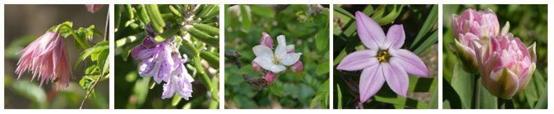 Les couleurs d'avril : Rose...