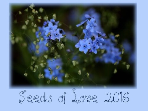 Seeds of Love 2016 : ma sélection