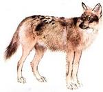 """sous-espèces éteintes du """"canis lupus """""""