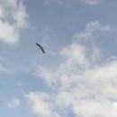 Au dessus de Nord-Plage - Photo : Bobnad