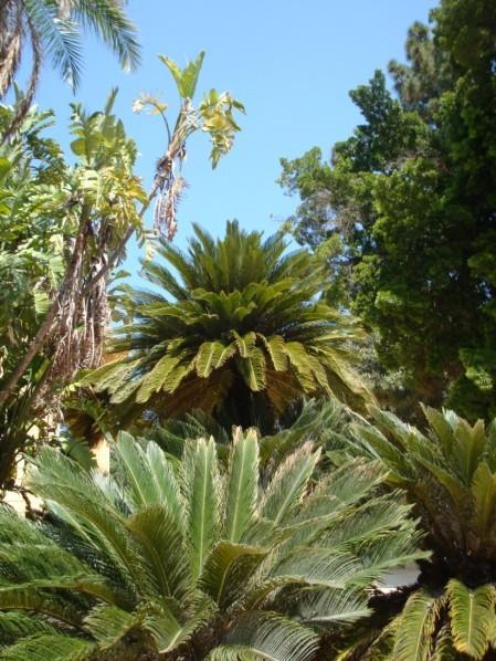 Palerme, Jardin botanique, Palmiers 1