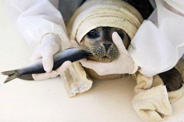 Ces photos de personnes sauvant des animaux vont vous redonner foi humanité,