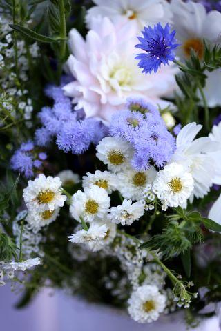 Bleu Blanc Belge