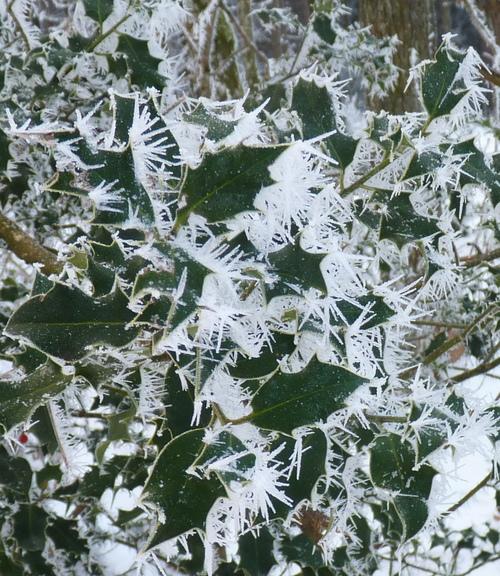hiver dans le jardin de l'abbaye 2017 4