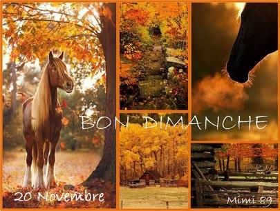 Bon Dimanche !