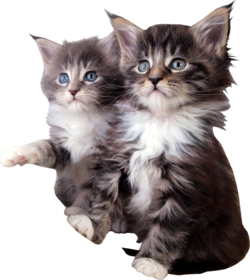 Állatok2