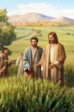Toi, Jésus, Tu m'enseignes l'Amour !!!