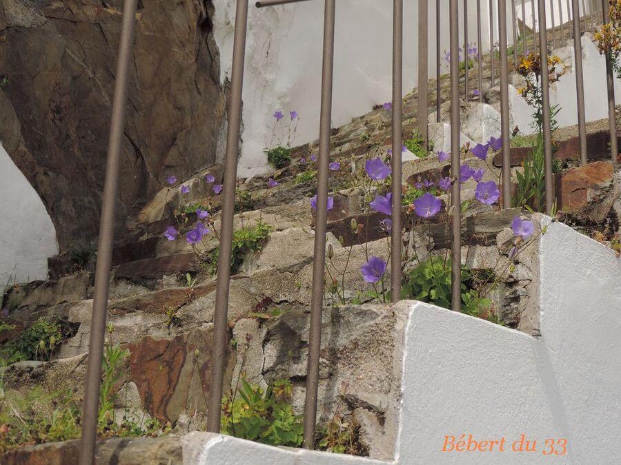 Plérin en Côtes d'Armor (2)