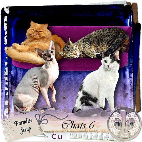 Chats 2