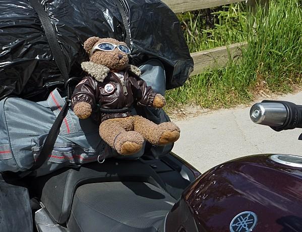 Petit ours roux