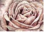 rose_des_sables_aquarelle_astor