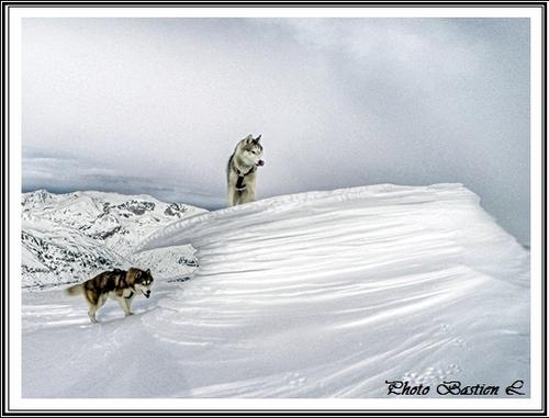 Vos Huskys à la neige (1er janvier 2015)