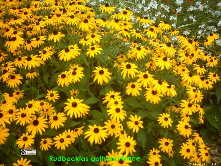 les plus belles plantes de mon jardin