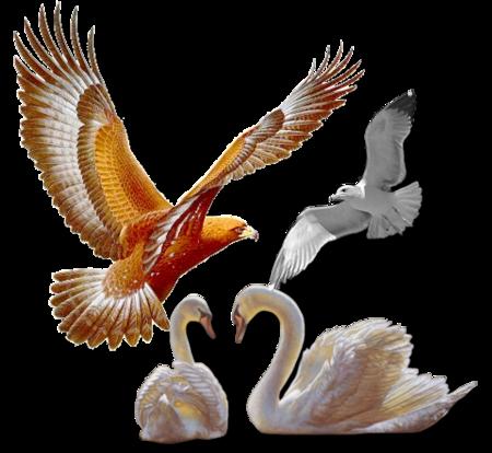 *  *  * Oiseaux *  *  *