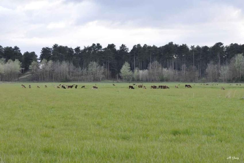 troupeau-2409.jpg