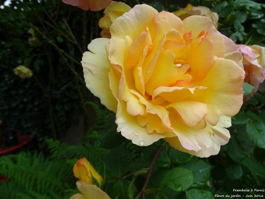 Fleurs du jardin - 2016 -