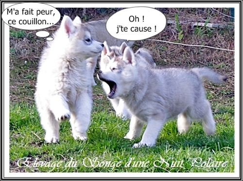 Amour, chasse et Husky (12 mars 2013)