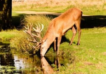 deer-579198_640