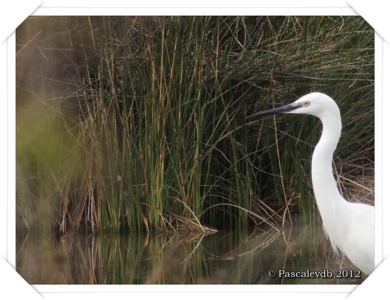 Visite à la réserve ornithologique du Teich - 3/8