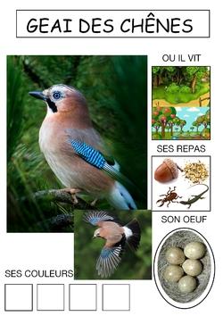 Le cahier des oiseaux (2)