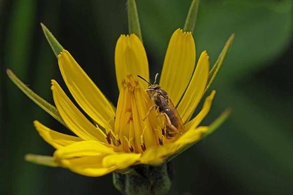 Fleurs-12-0200.jpg