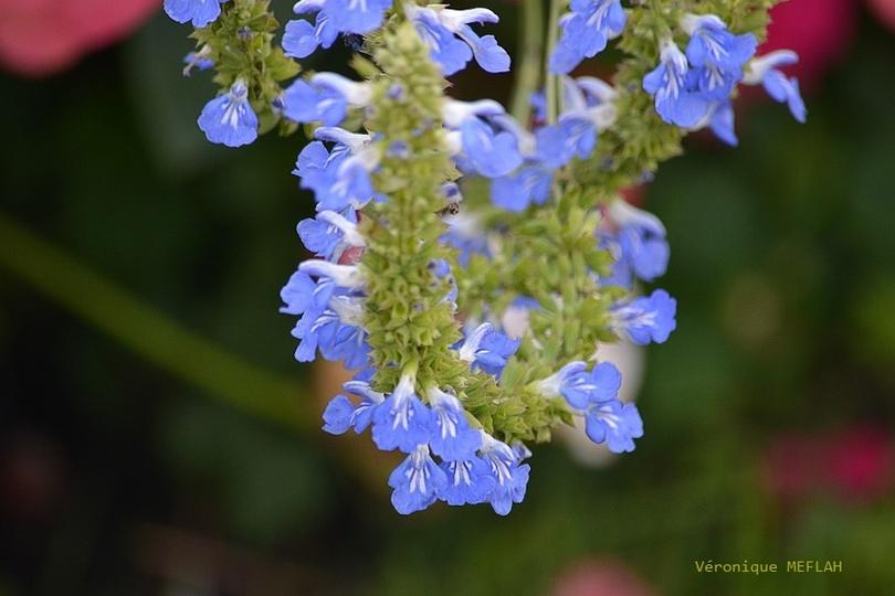 Rambouillet : Les fleurs du château