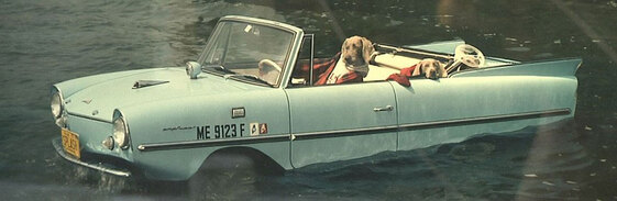 03 - Humour, dogs and car