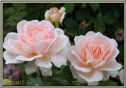 Compositions florales du mois de Mai