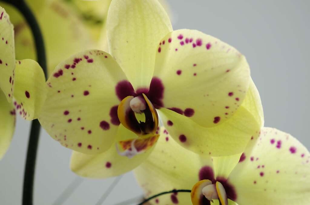 Mes orchidées et mes fleurs de la maison !