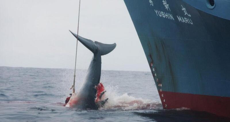 WWF, World wildlife  found